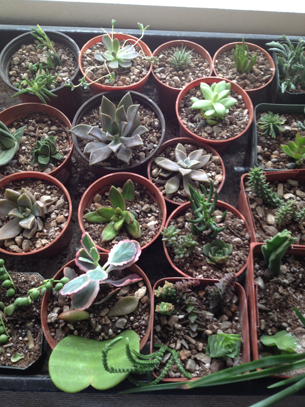 Cuttings two