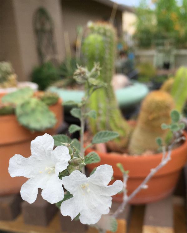 Bloom 1 072615