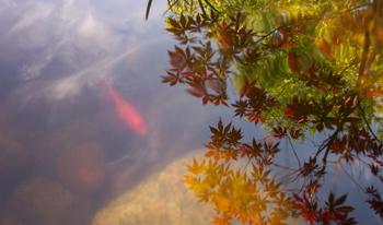 fish-n-sky-small.jpg