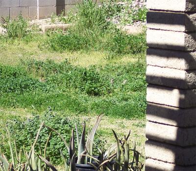 Doves_in_the_backyard