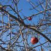 December_sky_