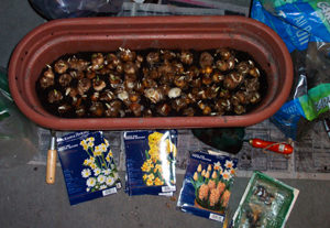 A_great_lot_of_bulbs