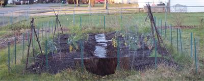 End_of_season_garden_2006