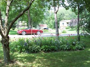 Monarda_and_car