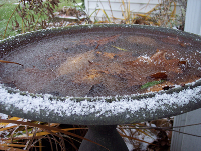 Winter_bird_bath